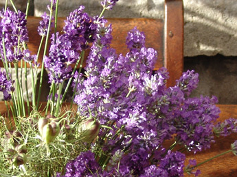 Lavender flowers with Nigella seed-heads